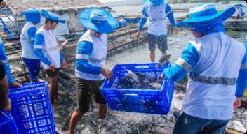 Methods of Aquaculture in the Philippines